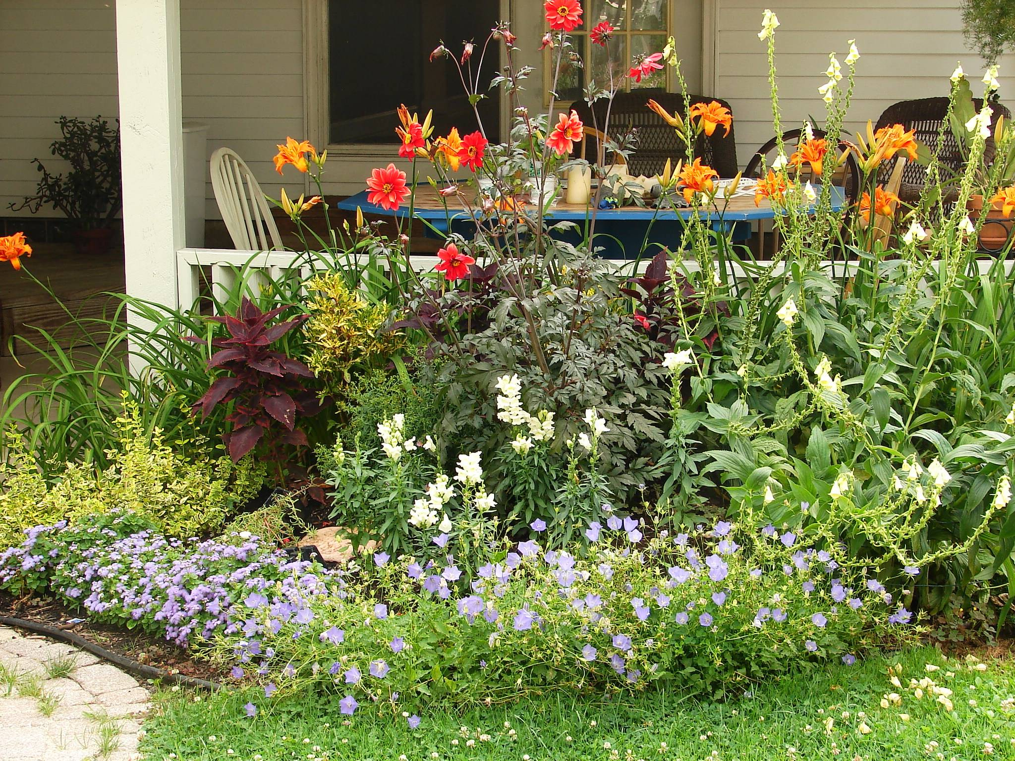 Create A Beautiful Butterfly Garden