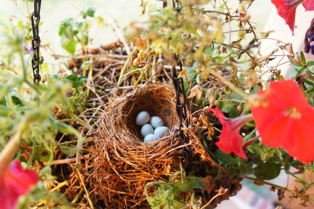 build a safe bird nesting site