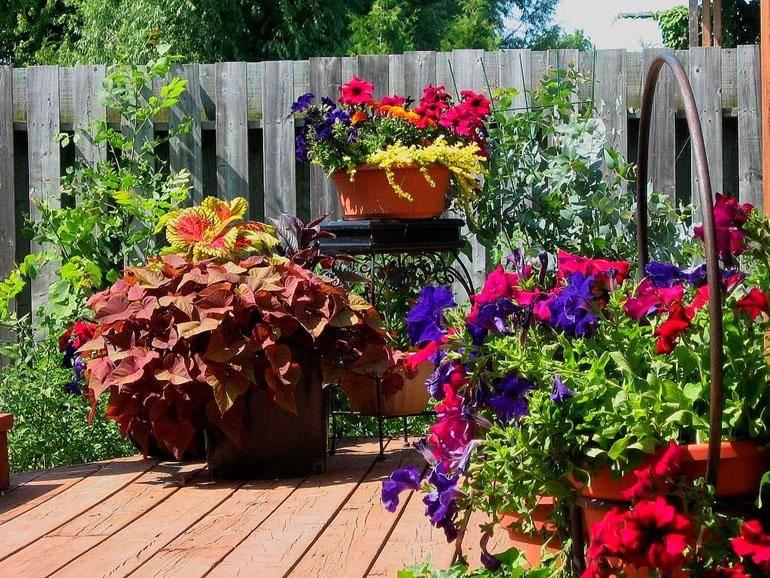 apartment porch garden